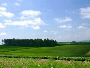 Земельный пай сельхозназначения: как его оформить в собственность?