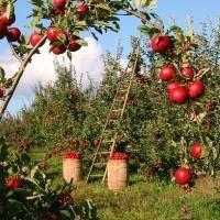 Оформление в собственность земельного участка в СНТ: какие документы нужны на сад, порядок процедуры