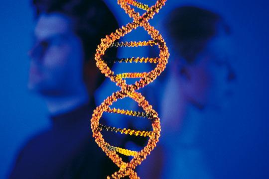 Можно ли сделать ДНК на отцовство во время беременности: на каком сроке он делается?